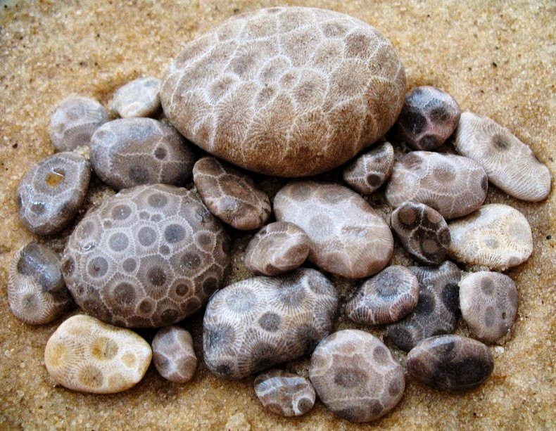 What is Petoskey stone, and Where Can I Find It.jpg