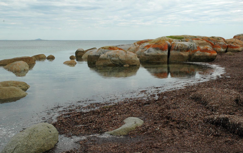 Lillies Beach (20).JPG