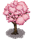 cherry_blossom_tree_1.png