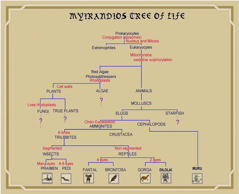 Myrirandios Evolutionary Tree.JPG